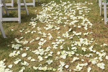 Scattered Fresh Petals